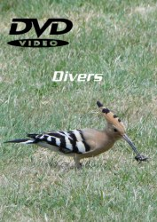 DVD Divers